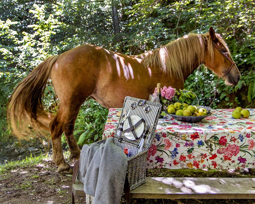 nature caballo